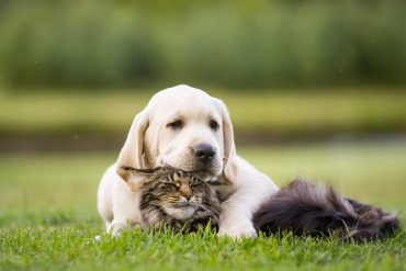 20 Best CBD Pet Treats to Try in 2021